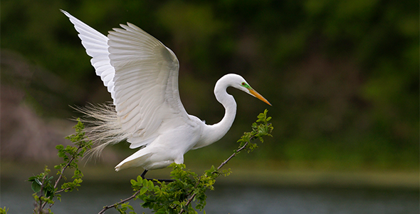 Egret Landing Daley Realty